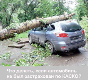 Упавшее на машину дерево - что делать?