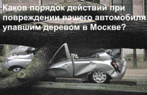 Упало дерево на автомобиль - что делать?