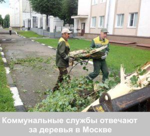 Коммунальные службы несут ответственность за состоянием деревьев в городе